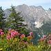 Blick auf Rauhekopf, Wannenkopf und Plankenhorn