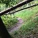 Ein Hauch von Urwaldfeeling: unter umgestürzten Bäumen hindurch