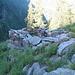 Alpe del Sentiero