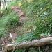Einstieg in die Falletschentraverse von Norden: einige Schritte zur kleinen Krete hoch - dort beginnt der eigentliche Pfad durch den Erosionstrichter