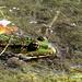 Frosch am Wasser