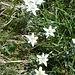 mehr Edelweiss
