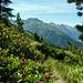 Alpenrosen säumen den Weg