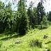 Wunderschöne Lärchenwälder oberhalb von Tschierv