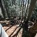 ...immer noch im Wald