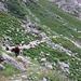 Il sentiero è sdrucciolevole a causa delle copiose fatte delle pecore.