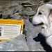 Mein Hund studiert die Hinweistafel in Sachen Herdenschutzhunde.