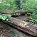 Kurz nach diesem von 2 alten Baumstämmen gebildeten V stösst man auf die Forststrasse, die von Punkt 612 her kommt und an dieser Stelle eine ausgeprägte Schleife Richtung Nordost aufweist.