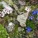 Blumengärtchen