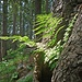 Lichtblick im Wald.