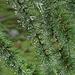 Wunderschöne Tröpfchen hängen an Zweigen