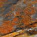 unter dem Ochsenhorn: prähistorische Jagtszene ?