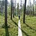 Auf Bohlenwegen durch lichten Nadelwald.