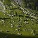 Dolomitentrümmer auf der abendlichen Weide.