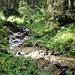 ein munteres Bächlein plätschert durch den Wald