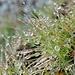 Unzählige Wassertröpfchen bedecken die Grashalme, die hier auf knapp 3000 Metern höhe gedeihen.