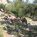 Die Kamele standen direkt am Weg. Und eines von ihnen ist mir eine halbe Minute nach dem Bild laut blökend hinterhergerannt. Das war fast so gruselig wie die fiesen Hunde entlang des Weges.