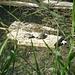...und zur Abwechslung mal Wasserschildkröten...