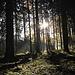 Schöne Trails im Wald