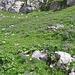 Una valletta nivale tappezzata di fiori.