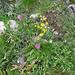 Un piccolo esempio dell'ncredibile varietà di fiori che si incontra lungo il percorso.