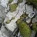 Der Abseilstand über dem ersten Felsgürtel.