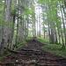 Aufstieg zur Graspoint Hochalm (1348 m)