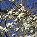 Frühling – das ist Leben!