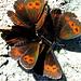 Schmetterlingsbouquet