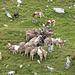 Gigers Grab unterhalb der Wolfegg... die Rinder scheinen einen weiteren Wanderer aufzufressen :.-)