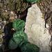 Muster der Natur (Foto [U sglider])