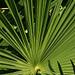 Mediterane Stimmung können auch Pflanzen aufkommen lassen