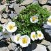 Fels und leuchtende Blumen - immer wieder eine Augenweide!