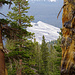 Lembert Dome peaking out between rugged pines