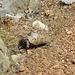 Mal wieder eine von den vielen Schildkröten, die man beim Wandern sieht. Ich hab sie einfach zu gerne...
