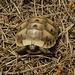 Und hier die letzte Schildkröte auf meiner Wanderung.