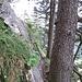 Eine schmale und sehr schöne Passage im Jägersteig.