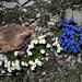und im Abstieg fanden wir zahlreiche farbenprächtige Blumensujets
