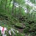 L'inizio del sentiero, il muschio sovrabbondante la dice lunga sul clima di questo luogo.