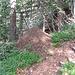 Un formicaio di Formica rufa lungo il sentiero.