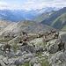 Steinbockgruppe oberhalb der Capanna Cadlimo