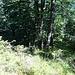 Durch lichten steilen Wald empor.