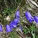 farbenfrohe Blumenpracht 6
