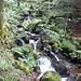 Chiare fresche e dolci acque poco sotto alla diga dello Schiessrothried
