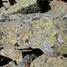 nicht nur Landkartenflechten - schon seit langem wurden diese Steine bewachsen