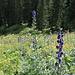 Teppiche von Wildblumen