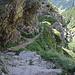 genau in der Bildmitte zweigt eine Treppe ab, der Weg führt zur Alpe Crotto
