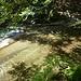 Trasparenze sul Rio Biordo