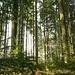 Im Wald auf dem höchsten Punkt des Chrüzberges (769m).
