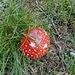 Den Pilz kenne sogar ich